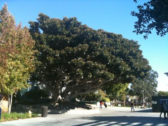SMC tree