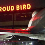 Proud bird with neon