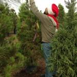 Scotty checks out a tree