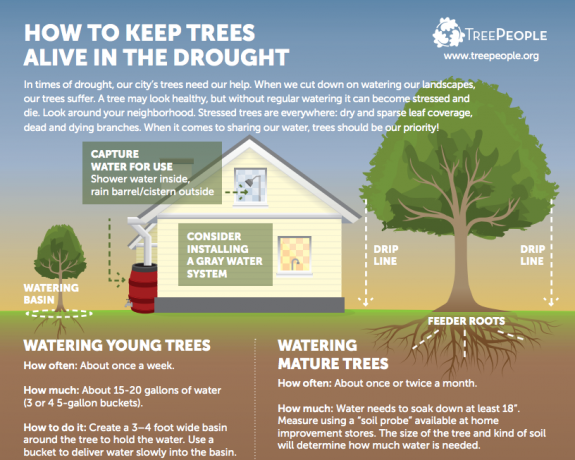 Tree People diagram showing root pattern of trees and how to conserve them in drought