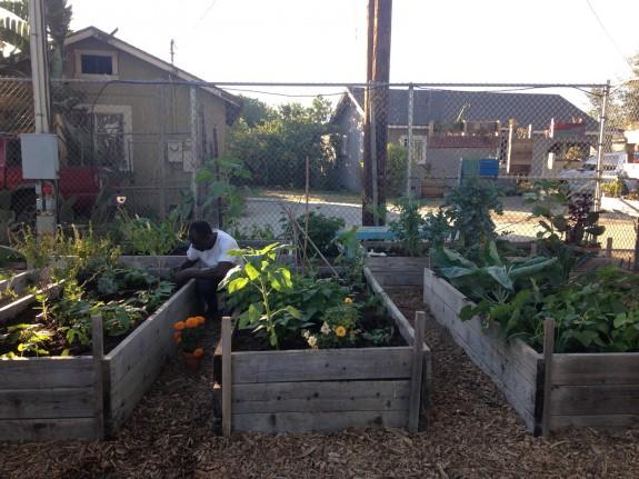 Ade in the community garden