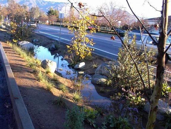 LA Zoo Bioswale at Roadway Absorbing Water