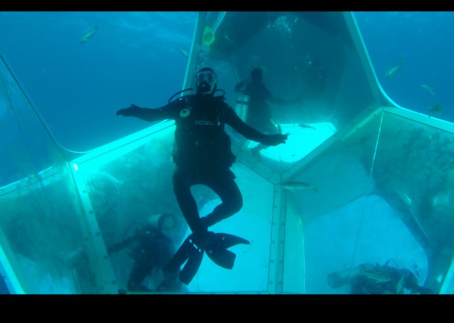 Underwater art installation opens near Catalina coast