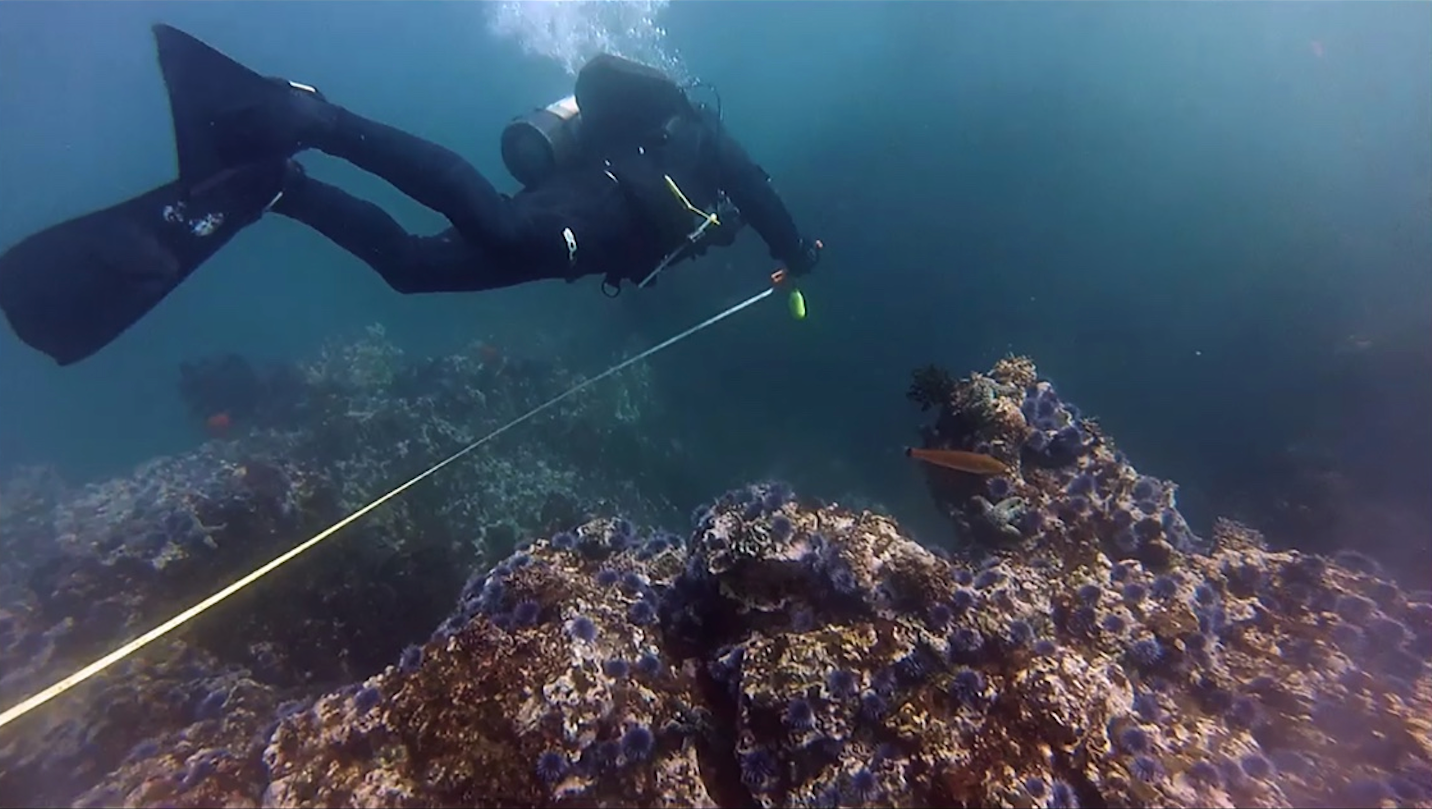 Tom Ford has devoted to 15 years to restoring the kelp forest on the coast off of Palos Verdes (photo courtesy Bay Foundation.)