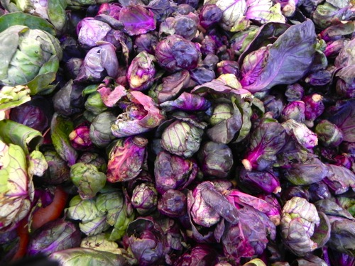 purplebrusselssprouts