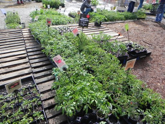 The rows and rows of plants