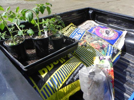 My Tomatomania Bounty