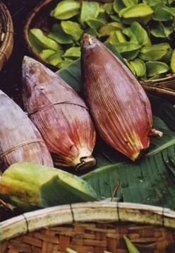 Banana Flower by Julie Fay Ashborn