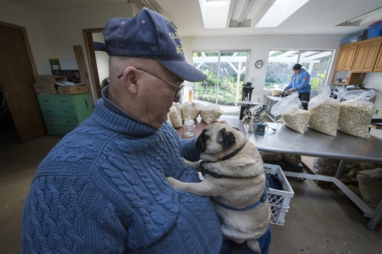 Jim Russell, accompanied by his service dog, Beau, in the facility where he processes macadamias at his farm in Fallbrook. 12/29/12  David Karp