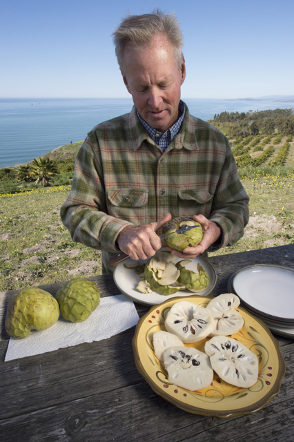 Anthony Brown prepares a tasting of cherimoyas grown at his Rincon Del Mar Ranch in Carpinteria. 2/25/13 © David Karp