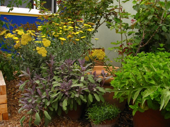 A potted herb garden.