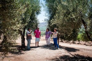 Walking through the olive trees at Silvestre.