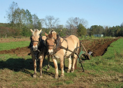 Fall Plowing at Stephen Leslie's Cedar Mountain Farms