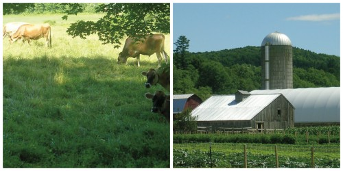 cows and market garden