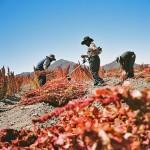 LisaMHamilton-Harpers-Bolivia2-700