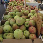 apples-digest