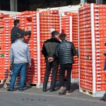 Wholesale buyers checking out pallets of imported fruit Photo credit: Fiona Reilly.