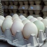Duck eggs pack more nutrition than the standard egg