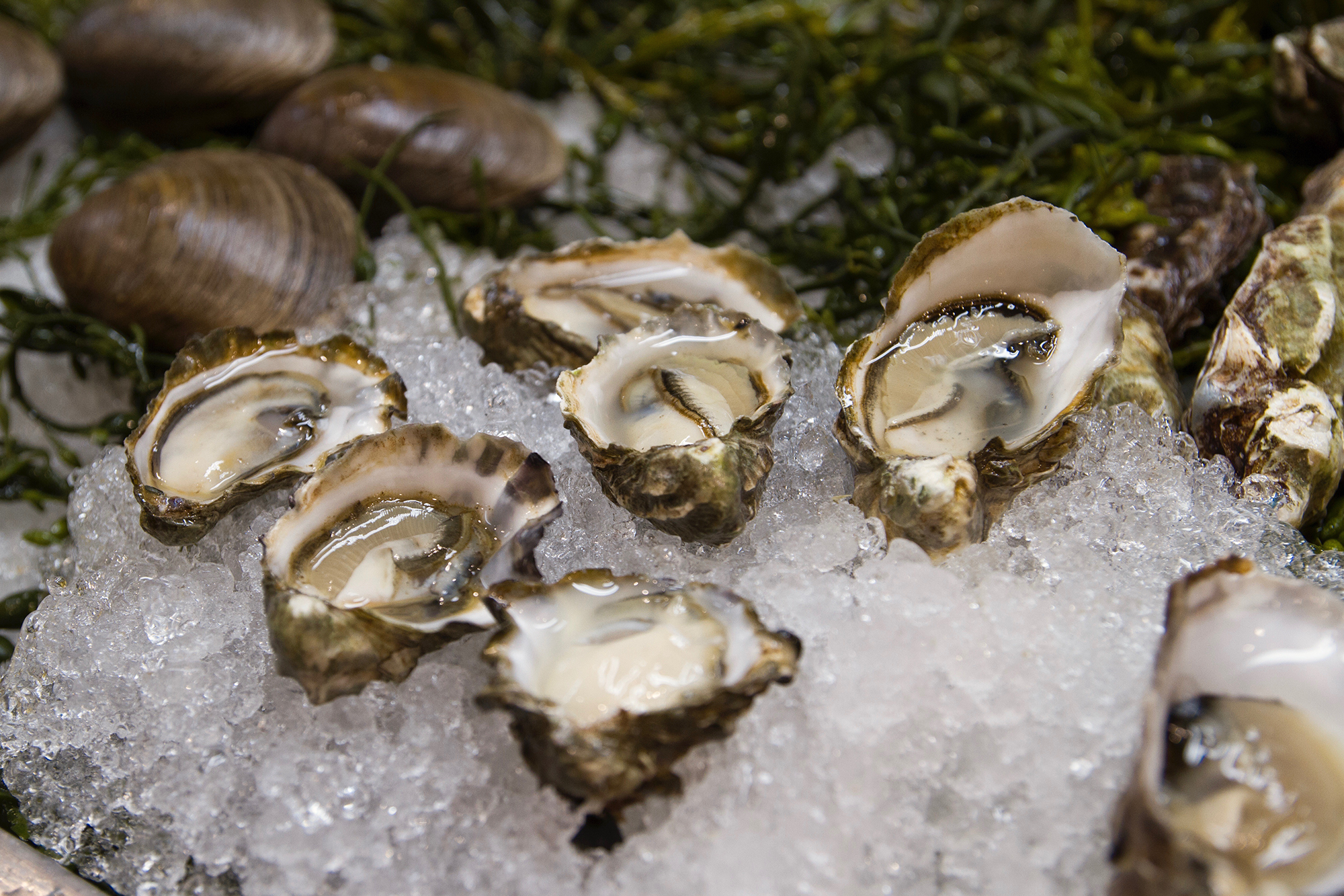 2000 CSP Oysters
