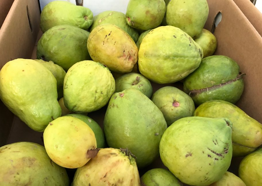 A pitch for picking up guavas at the market