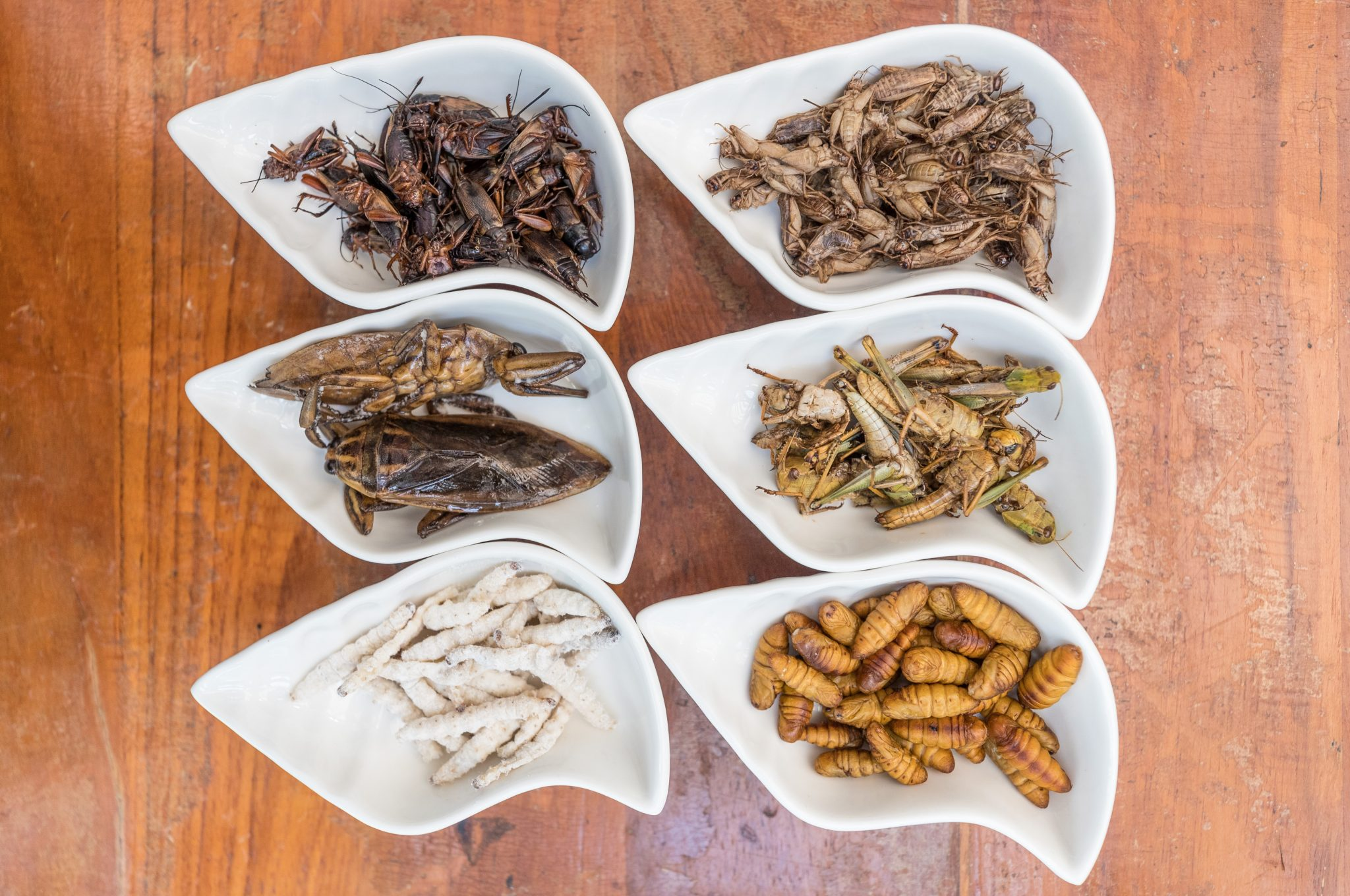 Red and white crickets, giant water beetles and grasshoppers, bamboo caterpillars and silkworms. Photo by Stan Lee/KCRW