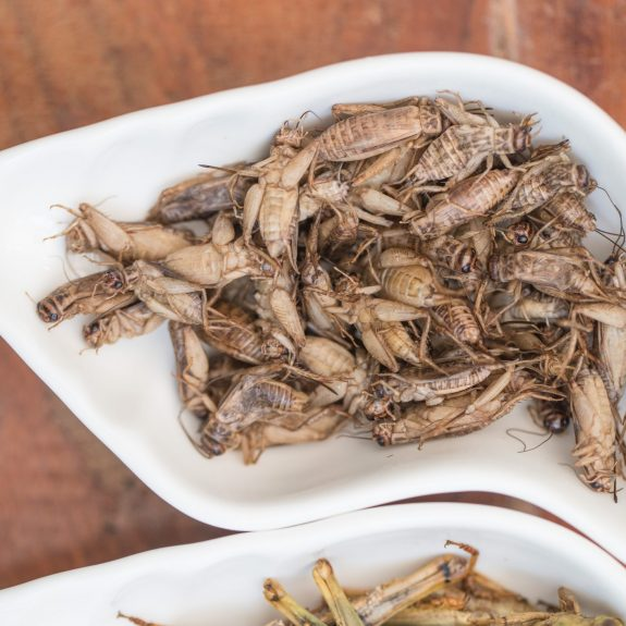 White crickets are paired with pasta and top nachos at Insects in the Backyard in Bangkok. Photo by Stan Lee/KCRW