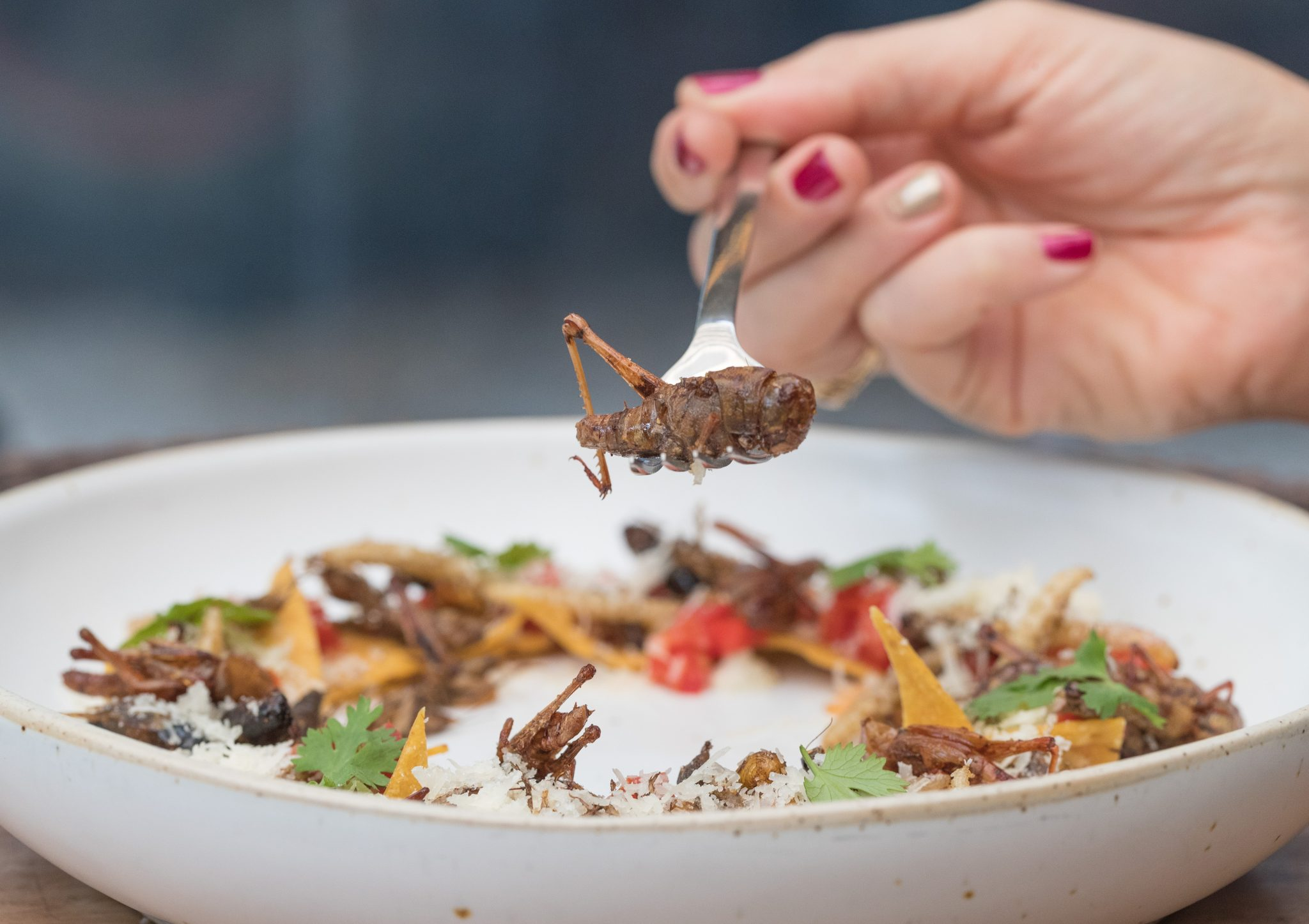 Crunch on crunch: The nachos feature deep-fried grasshoppers, crickets, silkworms and bamboo caterpillars. Photo by Stan Lee/KCRW