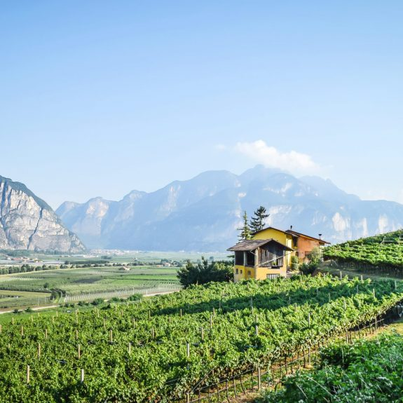 Vineyards producing Trentodoc, credit Istituto Trento DOC (1).jpg