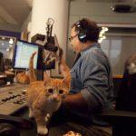 Steve_Cat