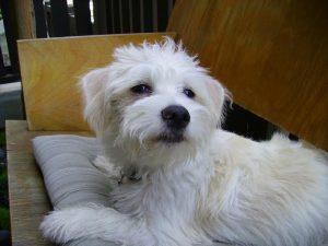 Tre Giles' confident pup Boo Radley