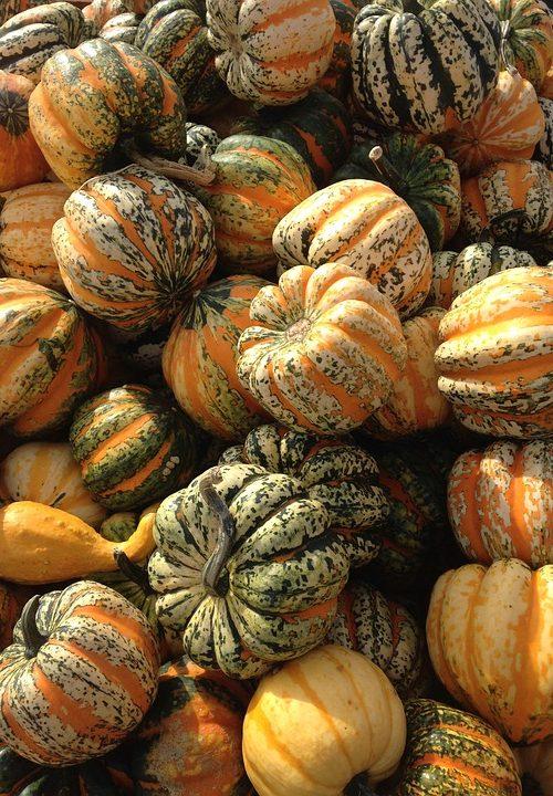 Pan Caliente: Thanksgiving Tunes