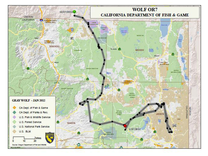 Wolf Map from CA Dept. of Fish and Game