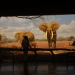 The Los Angeles Natural History Museum has exhibits from the far corners of the earth. The Becoming Los Angeles exhibition will focus on L.A.'s history, and the natural, cultural and technological forces that shaped it.