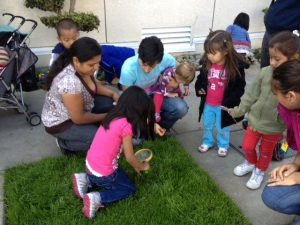 Kids examine a patch of grass for life.