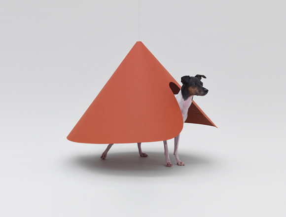 Pointed T by the Hara Design Institute for the Japanese Terrier
