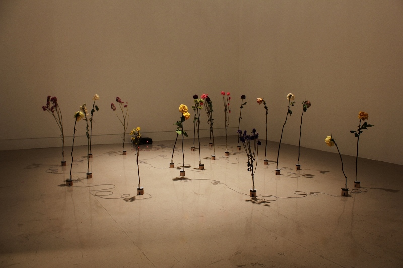 "A view of Adriana Salazar's installation at the Orange County Museum of Art. The piece, titled ""Moving Plant #30"" (2013), is comprised of dying flowers that Salazar rescued from a cemetery dumpster in Orange County. Each rests on a tiny motor that slowly rotates the plant. Credit: Carolina A. Miranda"