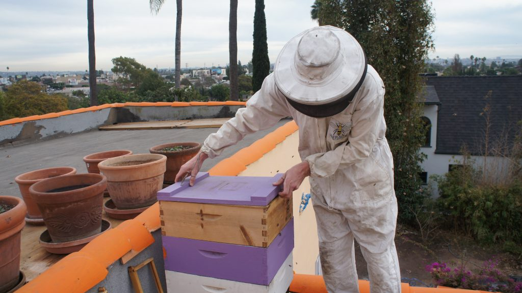 "Rob McFarland is the co-founder of HoneyLove, a nonprofit organization with a mission to protect honeybees and promote urban beekeeping. He's seen here harvesting honey from a hive of bees we visited in West Los Angeles. ""Bees are the most fascinating creatures"" says McFarland. ""The more you learn about them, the more they pull you into their world."" (Photo by Saul Gonzalez)"