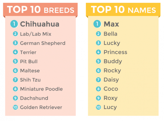 Most Common Dog Names In Canada