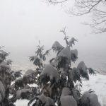 snow-600x450